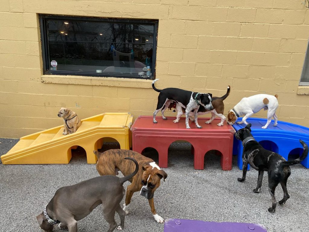 Doggy daycare can help prevent winter blues.s