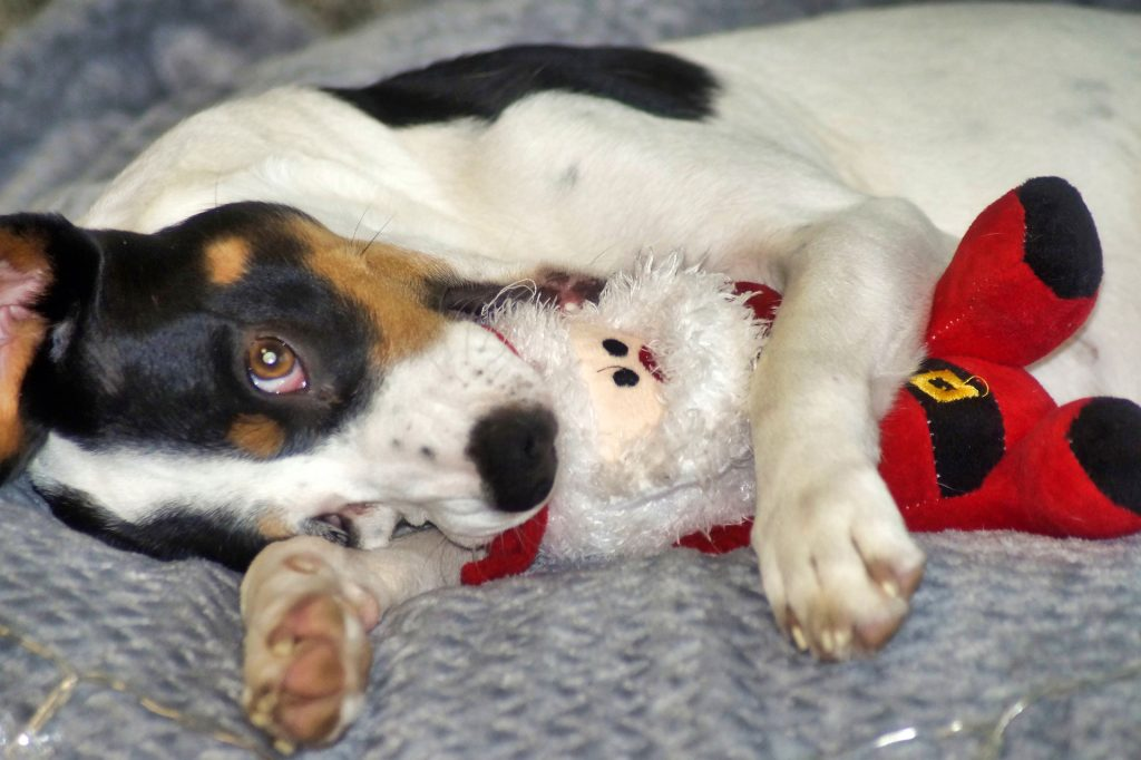 Providing dogs with toys can help prevent the winter blues.