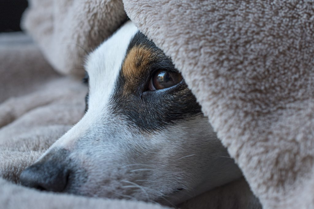 Dogs experience winter blues too